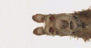 """La prima immagine ufficiale del cane Rex, protagonista di """"Isle of Dogs"""""""