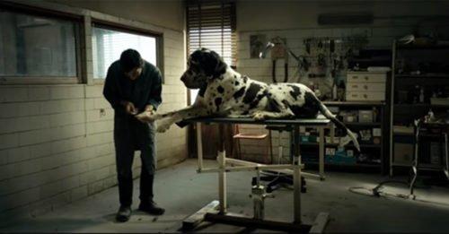 """Il trailer di """"Dogman"""", il film con cui Garrone parteciperà a Cannes 2018"""
