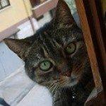 Foto del profilo di manuela80